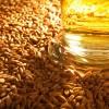 Пшеничный солод светлый